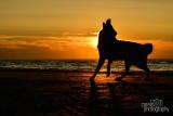 Hondenfotografie-2017029.jpg