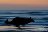 Hondenfotografie-2017033.jpg