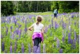 Hiking through the lupines