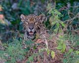 Brazil's Pantanal 2017