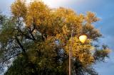 Lantern In Warm Sunshine