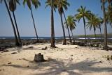 Hawaii palm trees and sea @f11 M8