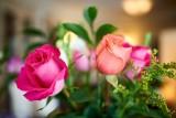 Roses @f1.4 D800E
