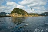 at the bay of Shimoda @f8 M8