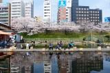 Fishing under Sakura @f3.2