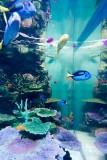 Aquarium of Sunshine at Ikebukuro @f2.2