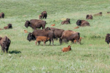 Black Hills and Deadwood South Dakota