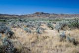 Grasslands NP Sask