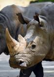 Rhino_6252.jpg
