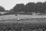 Working the Fields III