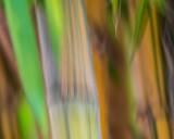 Bamboo Impressions
