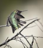 A Bird on a Stick
