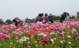 Work and Play in the Flower Fields 3