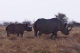 Rhino - Etosha National Park