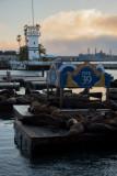 N6666 Pier 39