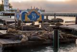 N6667 Pier 39