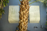 Palm Tree and Windows