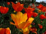 Symbol of Easter Season