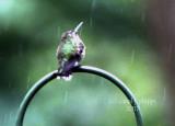 'Singing' in the Rain!