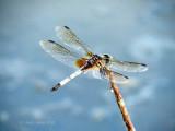 Dragonfly On My Dashboard