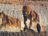 The Kalahari Desert / PBS Africa