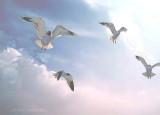 Seagull Ballet.JPG