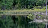 Suny Binghamton Wildlife Preserve NEW03420_dphdr.jpg