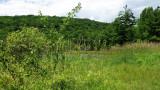 Suny Binghamton Wildlife Preserve NEW03457.jpg