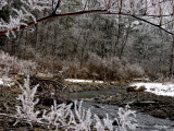 Falls Snow 12-28-03  tracy creek ice Dsc08073 (Flowers).jpg
