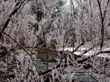 Falls Snow 12-28-03  tracy creek ice Dsc08074 (Flowers).jpg