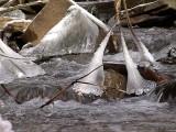 Jones Park Dsc00444 (Water).jpg