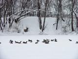Snow 12-26-02 DSC01167 (Snow).JPG