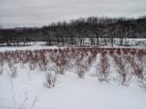 Snow 12-26-02 DSC01184 (Snow).JPG