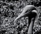 Syyvan Heights NC DSC00975 (Wildlife) B&W.jpg