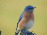 Bluebird Straight out of cam (Handheld)
