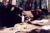 Sequoia Nat Park