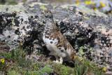 Colorado Birding Adventures