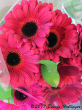 Gerbera At Star Market