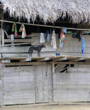 clothesline and dog Embera Village