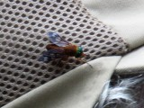 Green Eyed Fly on Jim's hat