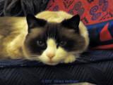 Martha's Lilicat