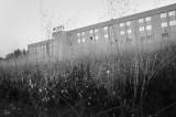 Hotel sin jardinero  (B/N Versión)