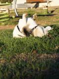 Practicando yoga en el parque