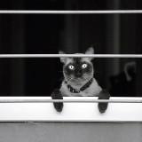 Gato humanizado