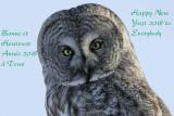 Chouette lapone --- _Z0U0562 --- Great Gray Owl