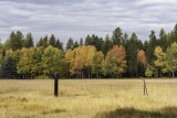2018 Fall Color in Montana