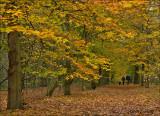 Autumn in my village