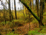 Woodland Scene in Delta Ponds