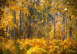 Woods in Fall.jpg