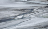 Ice patterns-2.jpg